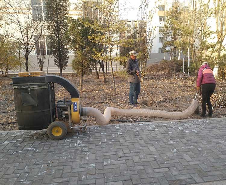 手推式树叶收集器作业现场